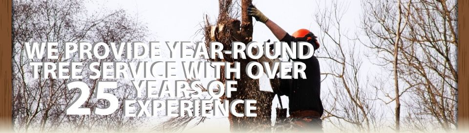 We Provide Year-Round Tree Service with over 25 Years of Experience | tree services