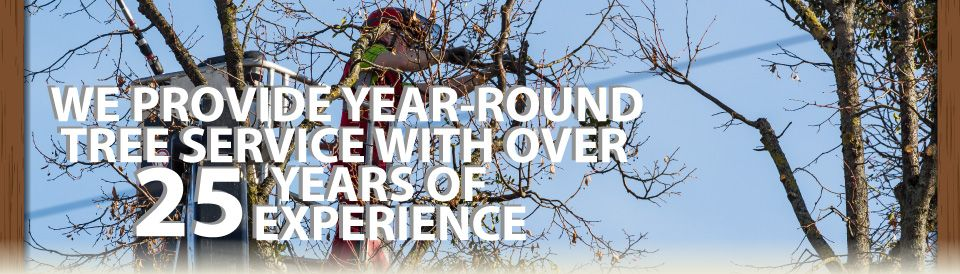 We Provide Year-Round Tree Service with over 25 Years of Experience | tree service